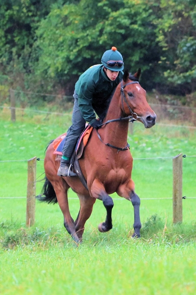 Deputy Commander on gallops 1