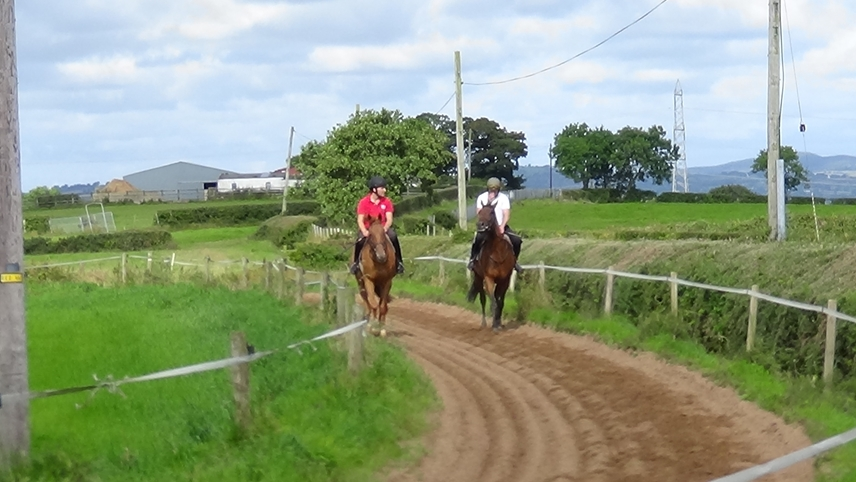 An Caisteal Nuadh on the gallops at Mount Top Stud